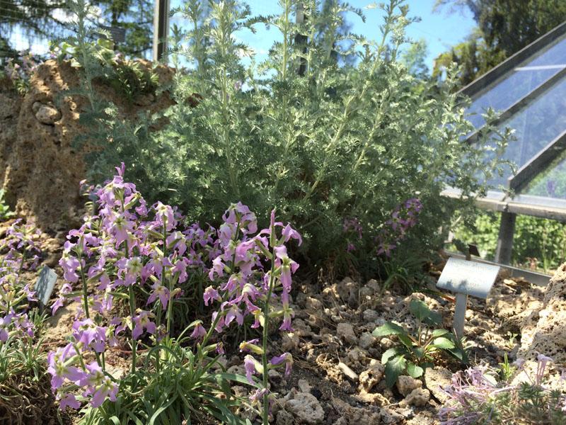 Vitrine mit alpinen Pflanzen