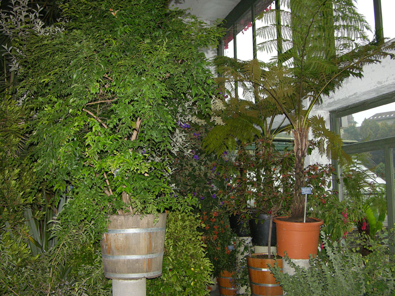 In der Orangerie werden Kübelpflanzen überwintert, im Sommer dient sie als Ausstellungsraum