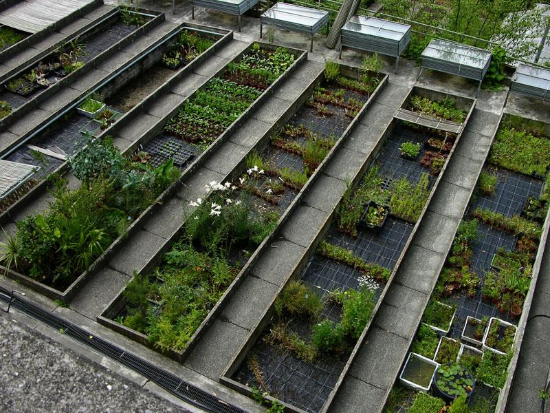 Überblick über einen Teil der Aussenanzucht des Botanischen Gartens