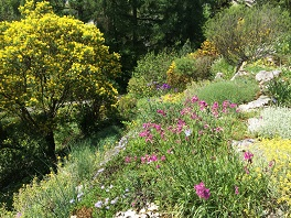 Alpinum Ostalpen