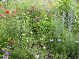 Raupen- und Schmetterlingsgarten