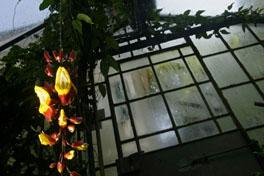 Orchideenhuaus