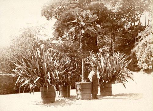 Obergärtner Alexander Schenk mit Kübelpflanzen (etwa um 1912)